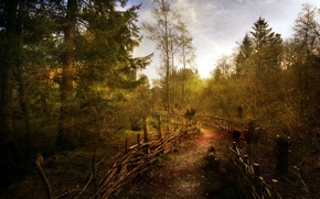 Picture road, forest, the fence