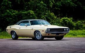 Picture Dodge, Challenger, Dodge, 1970, Challenger, R/T SE 440