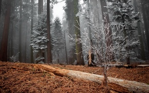 Picture winter, frost, forest, trees