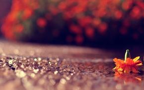 Wallpaper bokeh, macro, the game, light, road, glare, flower