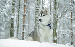 Wallpaper winter, dog, the