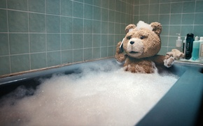 Wallpaper bear, bath, bathed, Ted, The third wheel