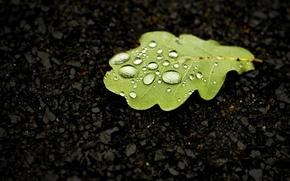 Picture water, drops, macro, sheet, oak