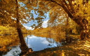 Picture autumn, forest, leaves, trees, shore, yellow, river