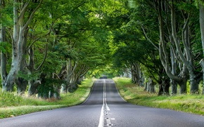 Picture road, greens, grass, asphalt, trees, nature, trunks, foliage, England