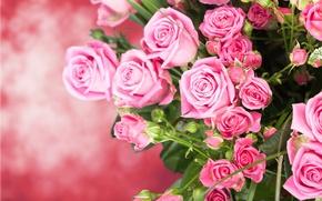 Wallpaper bouquet, roses, buds