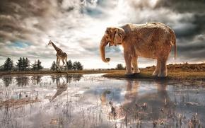 Picture river, fantasy, elephant, art, giraffe