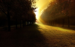 Wallpaper trees, light, shadow