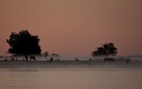 Picture trees, landscape, fog, river, Sergey Dolya