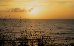 Picture sea, beach, sunset, stem, horizon, orange sky