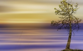 Picture style, background, tree, color