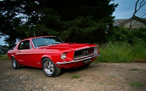 Picture Mustang, Ford, red, Coupe, muscle car, '1968, GT 390