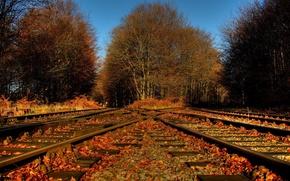 Picture autumn, leaves, nature, railroad