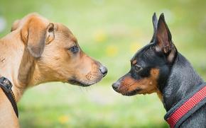 Picture dogs, texture, muzzle