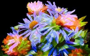 Picture drops, line, flowers, Rosa, bouquet, petals