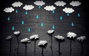 Picture flowers, background, rain