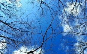 Picture IRAN, sky, cloud, tree, saravan