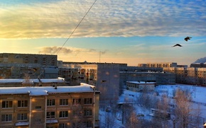 Picture cold, winter, the sky, snow, trees, snowflakes, dawn, home, The city, couples, pigeons, Surgut