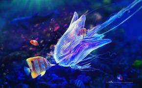 Picture fish, bubbles, blue, Medusa, tentacles, under water