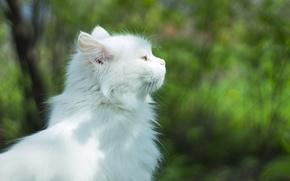 Picture Cat, Animals, Cutie, Mercy