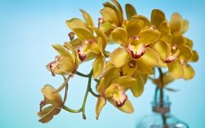 Picture bottle, branch, petals, Orchid