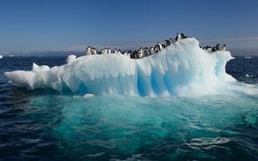 Picture water, the ocean, penguins, floe, Antarctica