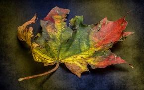 Picture Colour, Texture, Decay