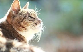Picture cat, cat, heat, ideal