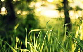 Picture greens, grass, macro, light, nature, bokeh