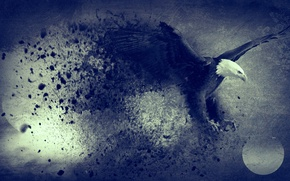 Picture abstract, moon, flying, bird, blue, freedom, eagle, digital art, artwork