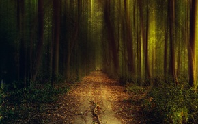 Picture light, nature, road, trees, the bushes, path, the evening, greens, grass, autumn, forest