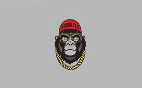 Wallpaper Gorilla, Cap, Old Dirty Dermot, Chain, Caps, Art, Brooklyn, Art, Humor, Glasses, Chain, Minimalism, Minimalism, ...