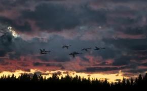 Picture sunset, birds, nature, flight, swans