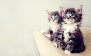 Wallpaper look, kittens, eyes