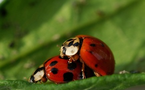 Picture the situation, ladybugs, fantasy