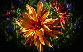 Picture nature, background, paint, petals