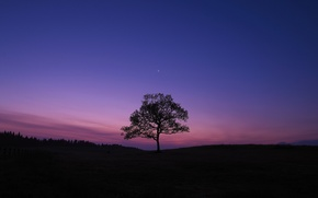 Picture the sky, tree, the evening, The moon, X-Pro1, Fujifilm