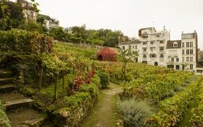 Picture France, Paris, the bushes, the vineyards, gardens, Montmartre Vineyards