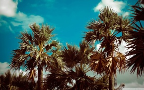 Picture Nature, Trees, Palms
