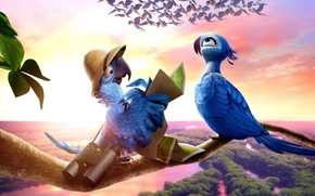 Picture birds, graphics, cartoon, parrot, panorama, binoculars, entertainment, RIO 2