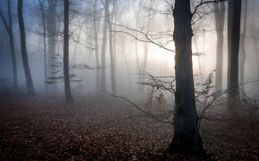 Picture autumn, forest, leaves, fog, dawn, mystic, twilight, Hungary