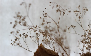 Picture flowers, macro, twigs, cold, rose, constellation, wilted rose, branches, fluff, autumn