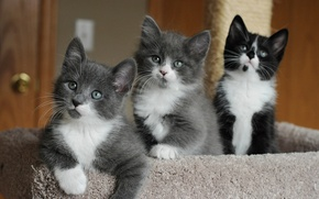 Picture eyes, kittens, cute, faces