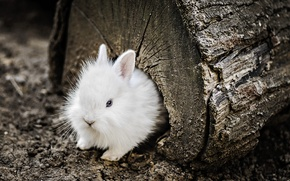 Wallpaper nature, background, rabbit