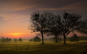 Wallpaper field, trees, nature, fog, trees, landscape, nature, sunrise, early in the morning