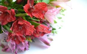 Picture flowers, cute, Alstroemeria