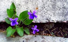 Picture leaves, flowers, stones, petals