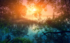 Wallpaper forest, river, grass, dawn, trees, the reeds, fog, morning, the sun