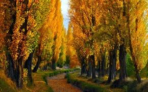 Picture autumn, landscape, nature