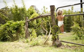 Wallpaper greens, nature, the fence, child, garden, curls, curiosity